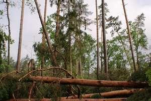 Huraganowy wiatr narobił szkód w lasach regionu