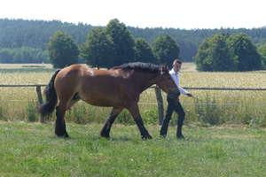X wystawa hodowlanych koni zimnokrwistych