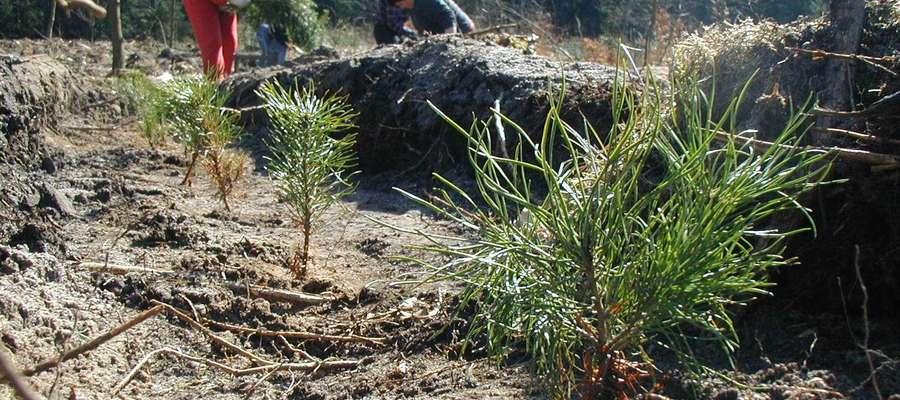 Wsparcie, które można uzyskać na posadzenie lasu, wynosi od 5 tys. zł do 7,6 tys. zł na hektar, dodatkowe pieniądze przysługują za zabezpieczenie uprawy przed zwierzyną poprzez ogrodzenie — 8,82 zł/m kw albo paliki — 1 132 zł/ha