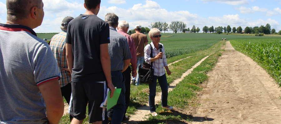 Co roku w czerwcu we Wrócikowie pod Olsztynem rolnicy mogą dowiedzieć się o zimotrwałości, agrotechnice i ochronie poszczególnych odmian roślin uprawnych. 22 czerwca 2016 - Dzień Pola w SDOO COBORU we Wrócikowie