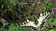 Mrągowskie motyle