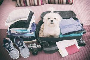 Jak zaplanować urlop ze zwierzakiem?