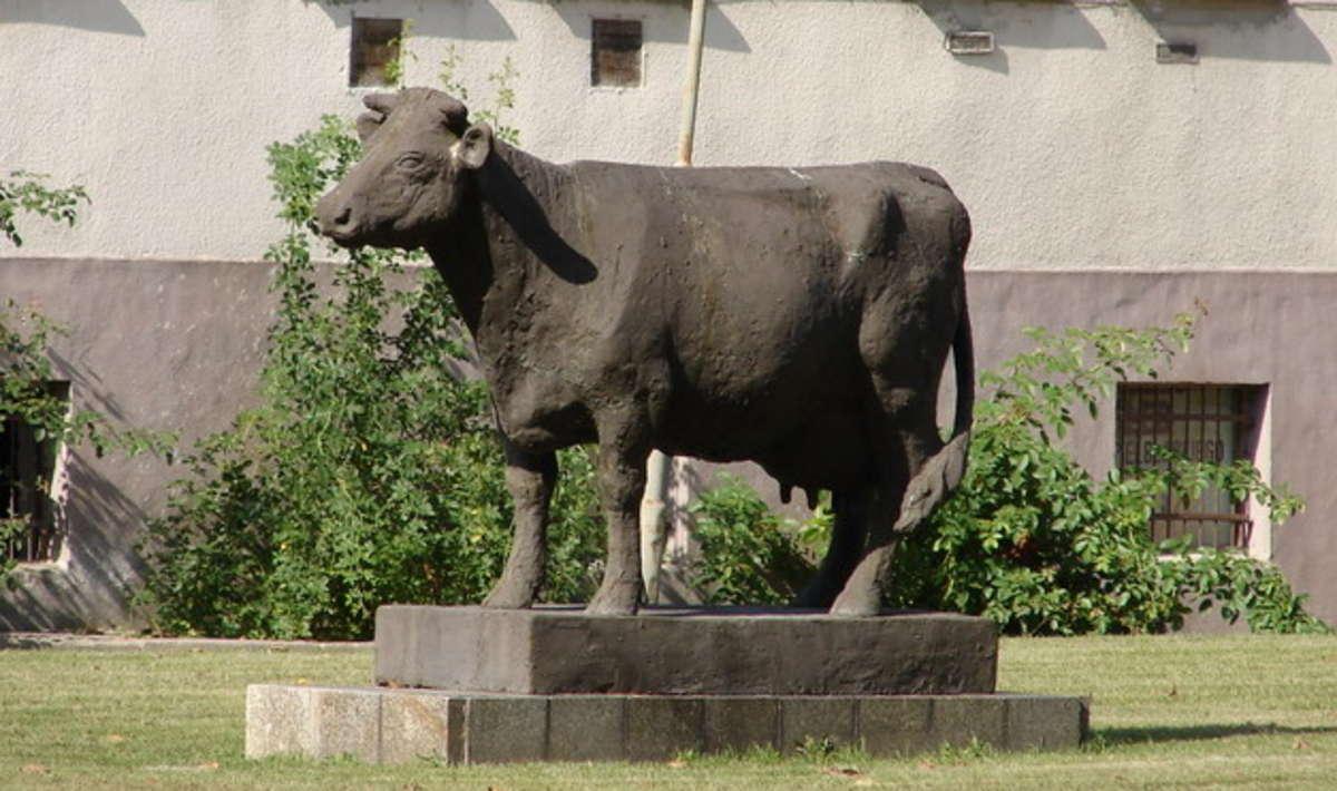 Krowa rekordzistka ma swój pomnik w Starym Polu - full image
