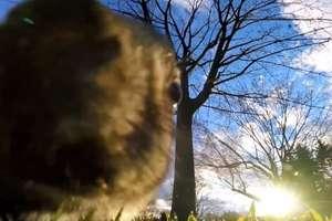 Wiewiórka ukradła kamerę GoPro. Co z nią zrobiła?