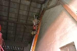 Mikołajki: strażacy usunęli gniazdo szerszeni