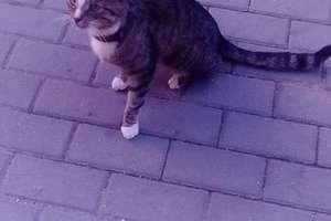 Czyj kociak błąka się po Gwiździnach?