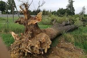 Wiatr przewracał drzewa i zrywał dachy