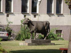 Krowa rekordzistka ma swój pomnik w Starym Polu
