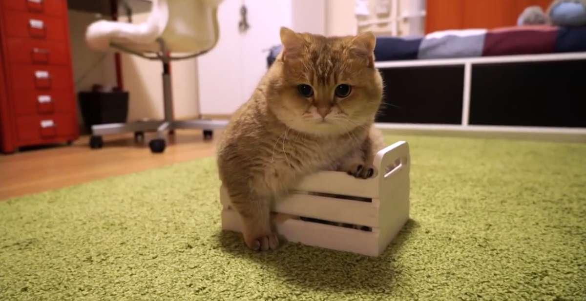 Kot zawsze zmieści się w pudełku - full image