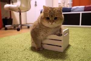 Kot zawsze zmieści się w pudełku