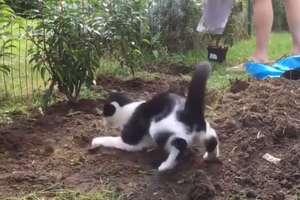 Ten kot uwielbia prace w ogrodzie