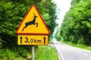 Policja ostrzega: Uwaga na zwierzęta na drogach!