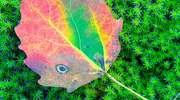 Jesień - czas dojrzałych kolorów