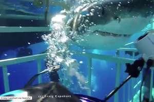 Rekin wpłynął do klatki z nurkiem. Przerażające nagranie!