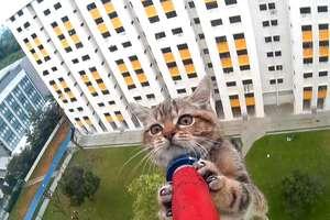 Strażacy ratują koty. Już 109 przypadków w tym roku!