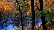 Jesień nad Jeziorem Skarlińskim - okolice plaży Adrian