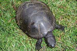 Szesnastka nabrała żółwiego tempa