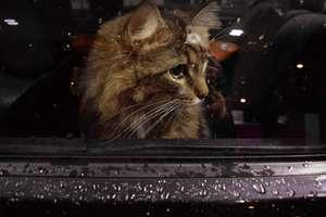 Jak przewozić samochodem zwierzęta domowe?
