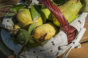 Gruszkowy smak jesieni