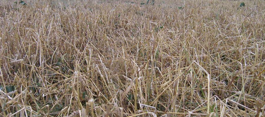 Rolnicy, którzy ponieśli straty w swoich gospodarstwach spowodowane klęskami żywiołowymi, będą mogli ubiegać się w ARiMR o pomoc na odtworzenie zniszczonych stałych składników gospodarstwa