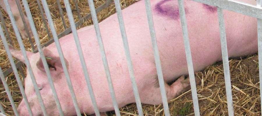 Dotychczas odnotowano w sumie 151 przypadków ASF u dzików oraz 23 ogniska tej choroby u świń