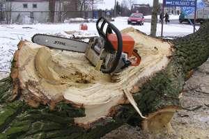 Sejm zajmie się masową wycinką drzew, ale nie wróci do starych przepisów