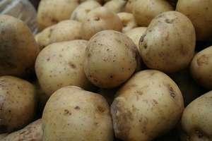 Do Polski trafiły skażone ziemniaki z Egiptu. Ministerstwo interweniuje