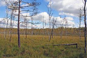 Rezerwat przyrody Jeziorko koło Drozdowa