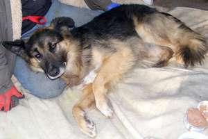Śmiertelnie chory nie zdążył znaleźć opiekuna dla ukochanego psa. Rex został bez domu i chęci do życia