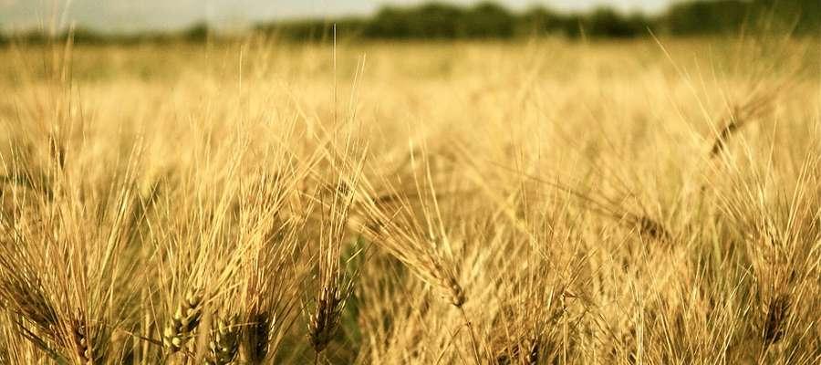 Trwają prace nad nowelizacją ustawy o ochronie prawnej odmian roślin