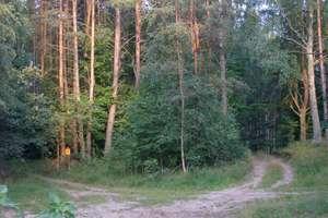 Na przebudowę 80 km leśnych szlaków wydaliśmy prawie 15 mln złotych