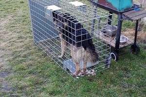 Odnaleziono Reksa. Psa szukały setki osób
