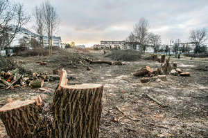 Po kolejnym posiedzeniu Sejmu skończy się masowa rzeź drzew?