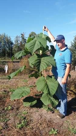 Marek Wierzbicki z około 2 metrowym drzewem Oxytree