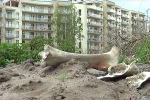Niecodzienne znalezisko mieszkańca Olsztyna: Wielkie kości w pobliżu osiedla
