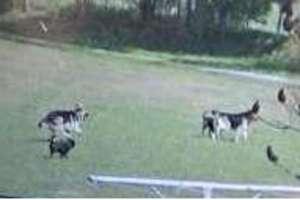 Psy uciekają i gryzą - policja ostrzega