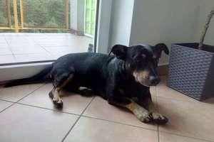 Bestialsko wyrzucił psa z samochodu. Kolejne zwierzęta porzucone przez właścicieli na wakacje