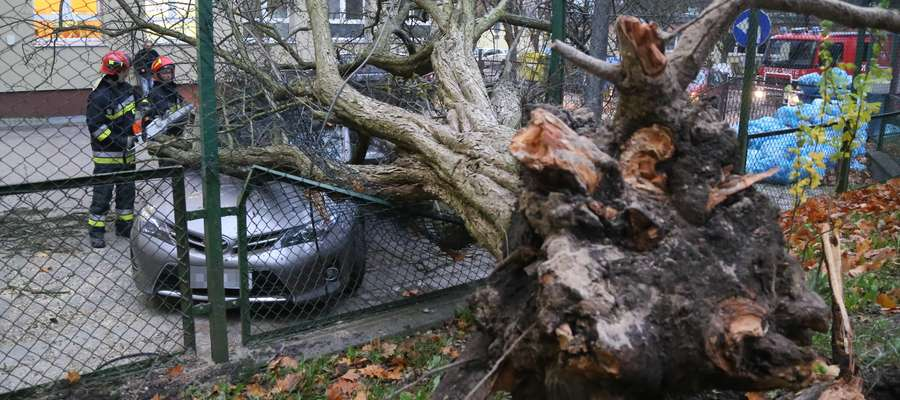 Konsekwencją silnego wiatru są połamane gałęzie drzew, dlatego należy zachować ostrożność zarówno w czasie parkowania pojazdu, jak i podczas podróży. Zdjęcie jest ilustracją do tekstu