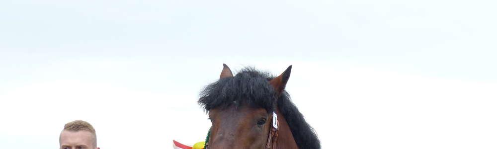 Wystawa koni