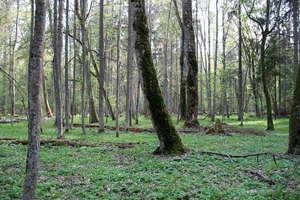 Dyrektor zakładu leśnego dostał w twarz od ekologa
