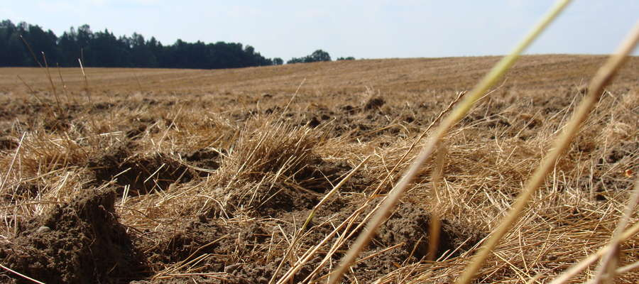 Kwasy humusowe stymulują wzrost i namnażanie się pożytecznych mikroorganizmów glebowych wpływając między innymi na polepszenie wymiany gazowej w glebie