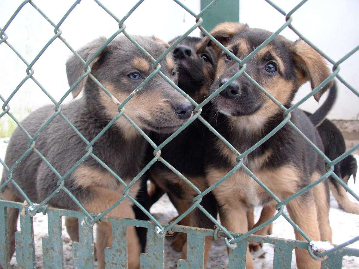Jest projekt zmian w ustawie o ochronie zwierząt - full image