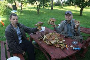 Takie okazy rosną w lesie koło Dąbrowy. Pochwalcie się grzybami!