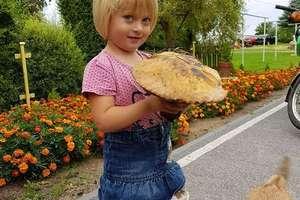 Grzyby, grzyby, grzybobranie. Zdjęcia czytelników