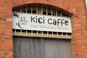 Sto tysięcy poszło w błoto? Co dalej z kocią kawiarnią w Olsztynie