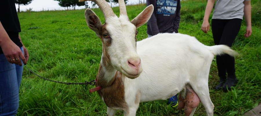Spisu zwierząt przebywających w siedzibie stada należy dokonać do 31 grudnia