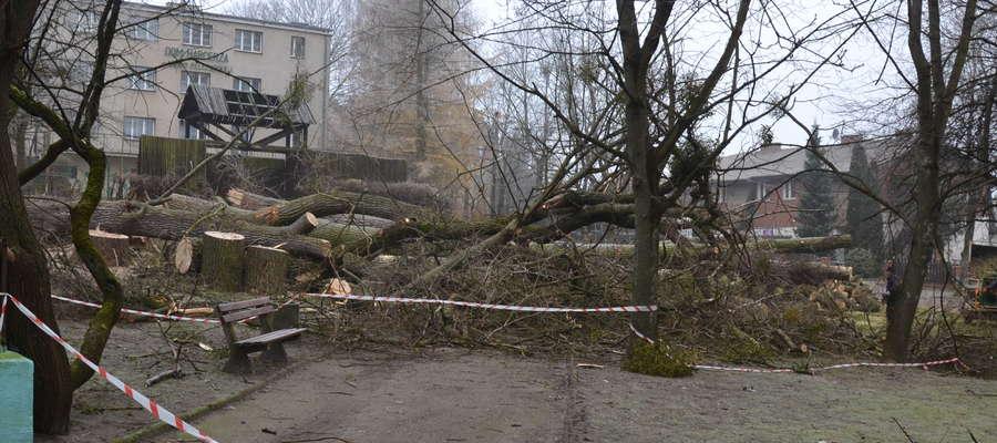 Przyszła kryska na kolejne drzewa w Ostródzie