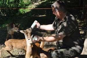 Prawie 100 zwierząt znalazło pomoc w ośrodku koło Lubawy