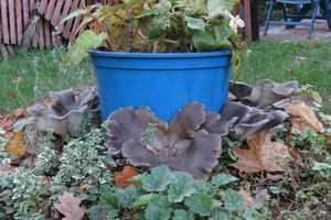 Zima to dobry czas na ... grzyby. Sprawdź, czego należy szukać w lasach [ZDJĘCIA]