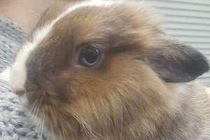 Ktoś zostawił królika na mrozie
